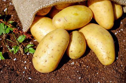 Kartoffeln Stärke